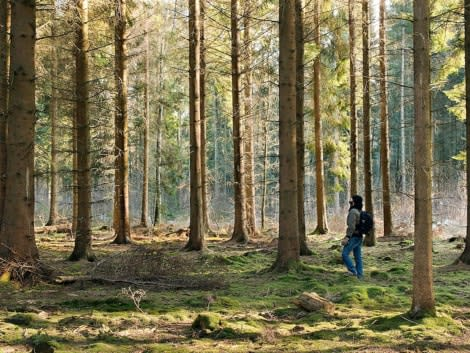 Man walking outdoors in woods with tall trees in Memphis Tennessee